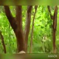 Petit troll des forêts