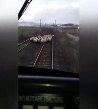 Si les moutons s'y mettent..
