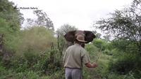 Si jamais vous vous faites charger par un éléphant