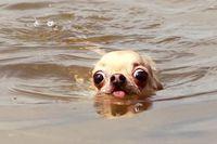 Un chien à l'eau