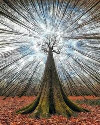 L'arbre au milieu de la forêt