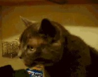 Les chats...
