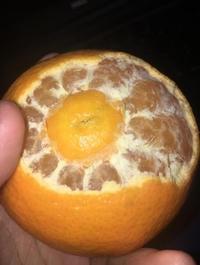 Orangeception