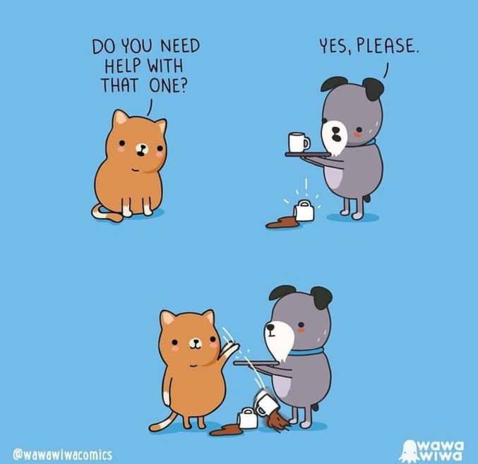 Bah oui, les chats n'aiment pas le café !