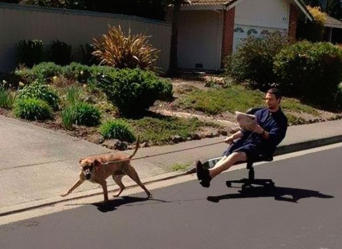 Soudain le chien voit un chat de l'autre côté du trottoir et un 36 tonnes arrive en face.