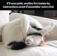 Chat Ikea