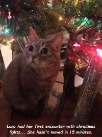 Un chat et Noël