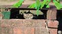 Voici le chat Mir