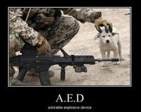 A.E.D.