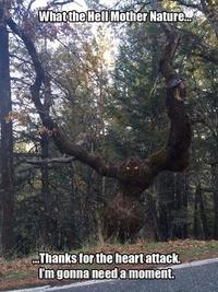 Le gros de la forêt