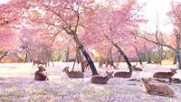 Le Japon et sa vision des paysages