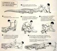 En cas d'attaque de crocodile