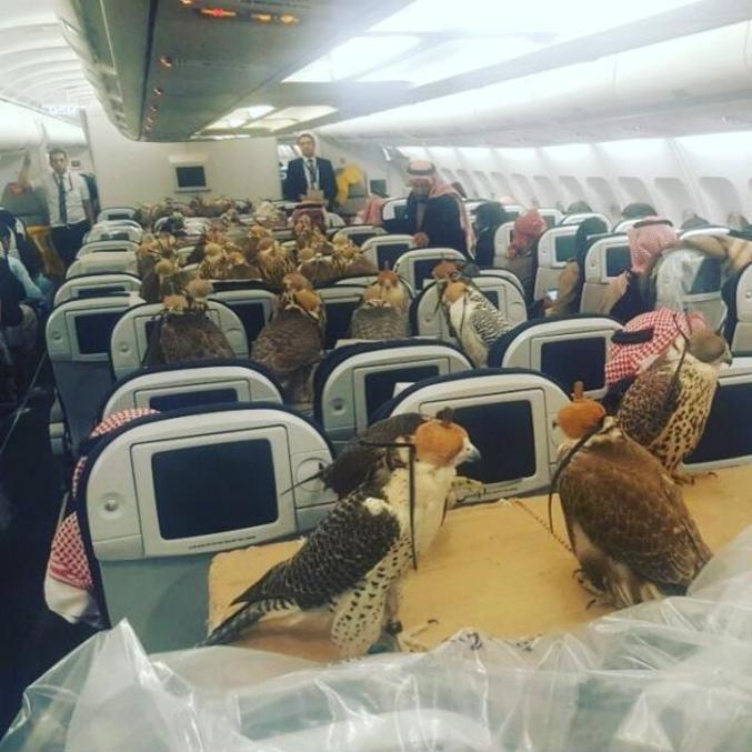 Le pire c'est que ça à beau être des oiseaux, si l'avion  se crache, ils meurent aussi.