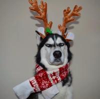 Noël pas joyeux.