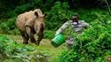 Kan tu veux savoir quel  bruit fait un rhinocéros adulte