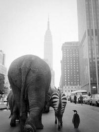 Les lombriks à New-York