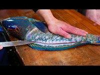 Préparation d'un poisson perroquet géant sashimi (Japon)