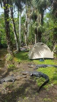 Chérie, la nuit passée, on a planté la tente un peu n'importe où...