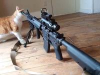 Le C.C.C. présente son nouveau masseur pour chat