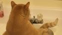 Chat dans lavabo