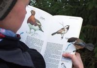 Ornithologue expert