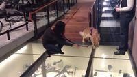Le chien et le plancher de verre