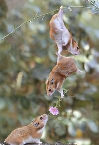 Hamsters romantiques