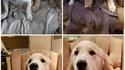 Les 2 mêmes chiens à des âges différents...
