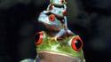 Empilement de grenouilles