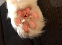 Pourquoi les chats se lèchent-ils les pattes ?