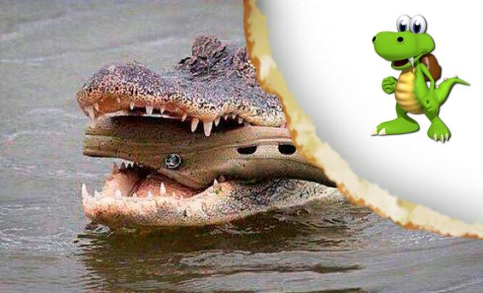 Un croc dans un croco qui se fait croquer par Croc