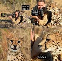 Safari photo