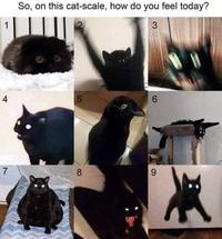 Échelle de chat