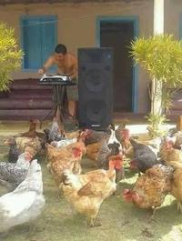 Quand il y a plein de poulette sur la piste