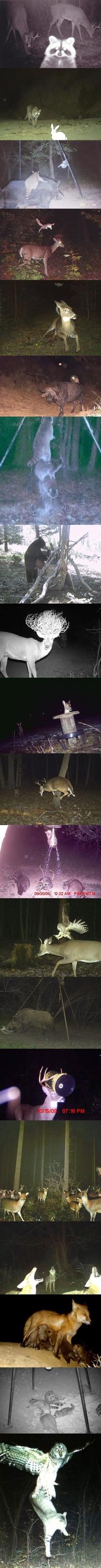 Les animaux, la nuit