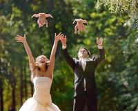Y avait plus de colombes chez le boucher