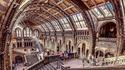 Intérieur du Musée d'Histoire Naturelle de Londres