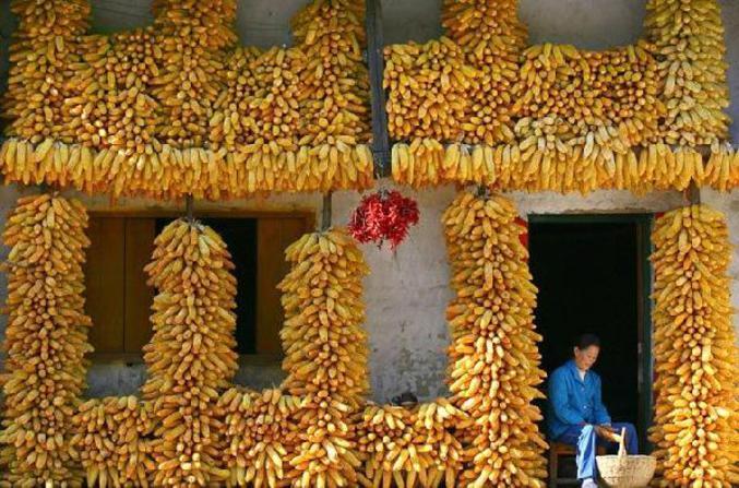 Pas de confusion possible. Cette femme vend du maïs.
