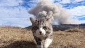 Les chats cools partent sans jeter un regard aux explosions