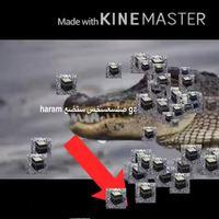 Crocodile sauve le moyen orient