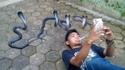 Photo royale