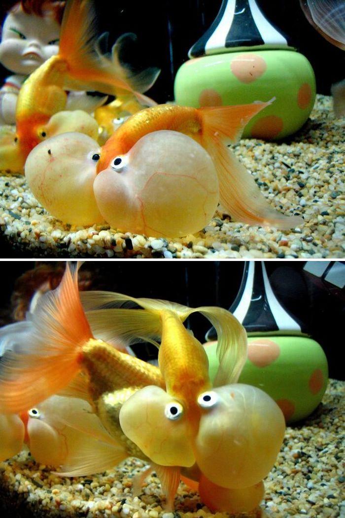 Poisson clown for Bloc de nourriture pour poisson