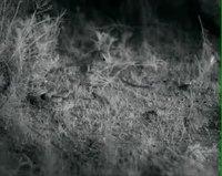 Fable: La gerboise et le serpent...