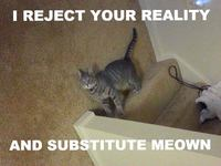 Les chats et la gravité