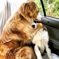 Encore une visite chez le vétérinaire