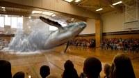 Une baleine dans une salle de sport