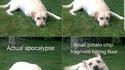 Réactions du chien
