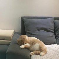 Le chat de magnussoren fait un rêve
