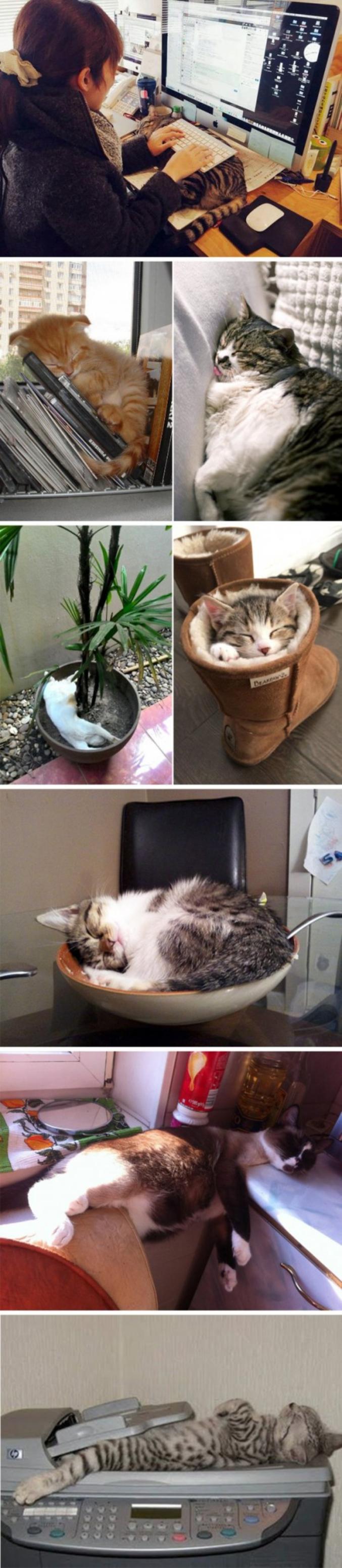 C'est ainsi que les chats dorment.