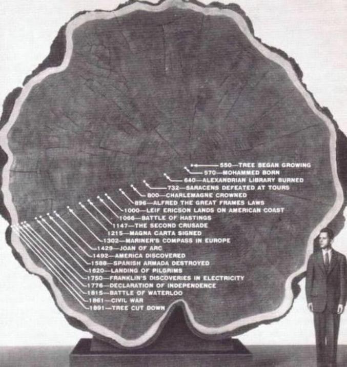 D'un arbre.